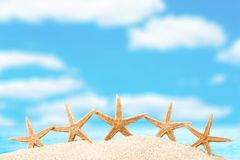 Starfishes Royalty Free Stock Photo