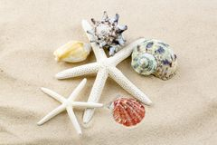 Starfishes, pearls, and amazing seashells. Close up royalty free stock image