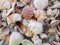 Starfishes, pearls, and amazing seashells. Close up stock photography