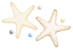 Starfishes and Perls Isolated on. Vector Royalty Free Stock Image
