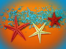 Starfishes Royalty Free Stock Photos