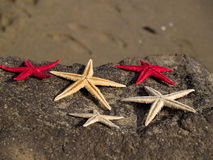 Starfishes on rock Stock Images