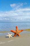 Starfishes on the sand. Royalty Free Stock Photo