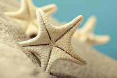 Starfishes in sand beach Royalty Free Stock Photo