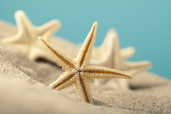 Starfishes in sand beach Stock Photos