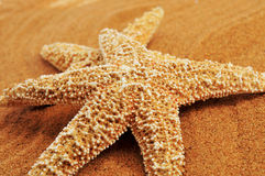 Starfishes on the sand of a beach. Closeup of some starfishes on the sand of a beach stock photography
