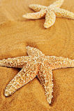 Starfishes on the sand of a beach. Closeup of some starfishes on the sand of a beach Stock Photo