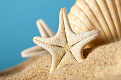 Starfishes in sand beach Royalty Free Stock Images