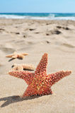 Starfishes on the sand of a beach. Some starfishes on the sand of a beach stock images