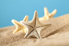 Starfishes in sand beach Stock Photography