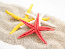 Starfishes on sand Royalty Free Stock Photo