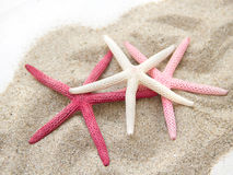 Starfishes on sand Royalty Free Stock Image