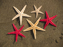 Starfishes on the sand Royalty Free Stock Photography