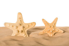 Starfishes in sand Stock Photo