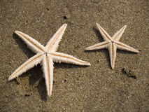 Starfishes on sand Royalty Free Stock Images