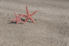 Starfishes on a sandy beach Royalty Free Stock Photos