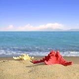Starfishes on sandy beach Stock Photos