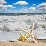 Starfishes on sandy beach Royalty Free Stock Photo