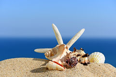 Starfishes on sandy beach Royalty Free Stock Photos