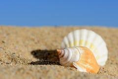 Starfishes on sandy beach Stock Photo