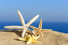 Starfishes on sandy beach Royalty Free Stock Images