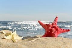 Starfishes on sandy beach Stock Image