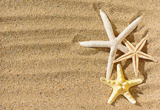 Starfishes on sandy beach Stock Photography