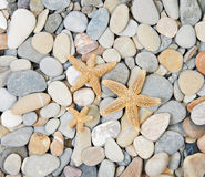 Starfishes on sea pebble Royalty Free Stock Image