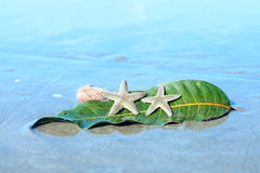Starfishes , sea shell and leaf on wet sand Stock Photography