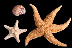 Starfishes and seashell Royalty Free Stock Images