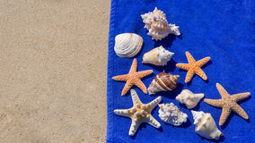 Starfishes and seashells Stock Photos