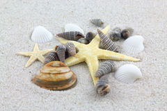 Starfishes and seashells on the beach Stock Photos