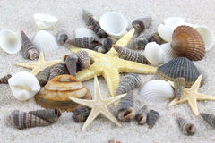 Starfishes and seashells on the beach Stock Image