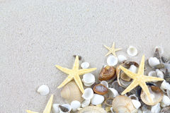 Starfishes and seashells on the beach Royalty Free Stock Photo