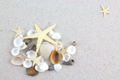 Starfishes and seashells on the beach Stock Photo