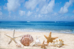 Starfishes and seashells on the beach Royalty Free Stock Photography