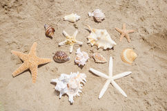 Starfishes and seashells on a beach Stock Photos