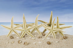 Starfishes and seashells on beach Stock Photography