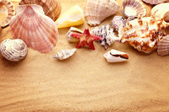 Starfishes and seashells on sand Royalty Free Stock Image