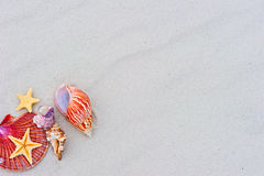 Starfishes and seashells on sand Royalty Free Stock Photos