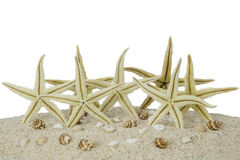 Starfishes and seashells on the sand Stock Image