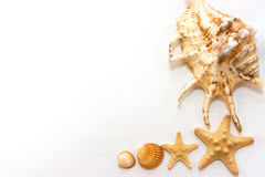 Starfishes and shells. Isolated on white background Stock Photography
