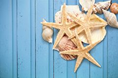 Starfishes and Shells Stock Photos