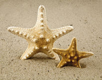 Starfishes Stock Images