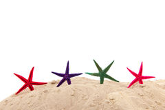 Starfishes am Strand Stockfoto