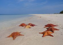 Starfishes-Strand Stockfoto