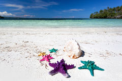 Starfishes in tropic paradise. Travel Vacation concept Royalty Free Stock Photo