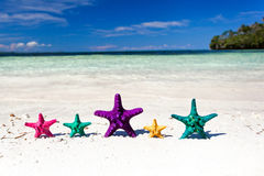 Starfishes in tropic paradise. Travel Vacation concept Royalty Free Stock Images