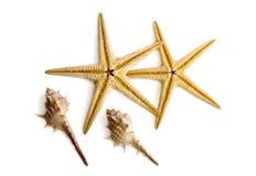 Starfishes und Shells. lizenzfreie stockbilder