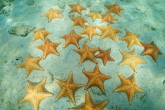 Starfishes underwater on seafloor in the Caribbean Royalty Free Stock Photo
